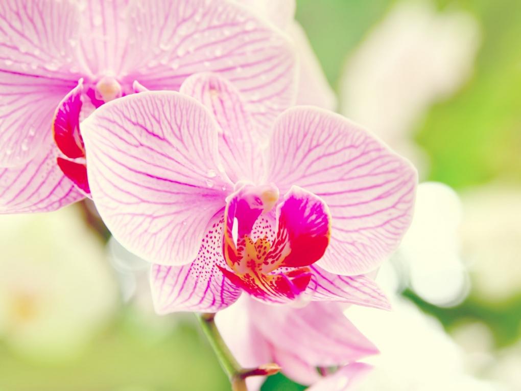 арене только фотообои розовые орхидеи к каким обоям подойдут чем ассоциируются дизайнеров